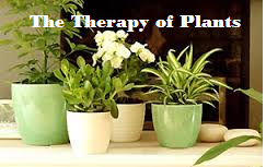 therapy of plants
